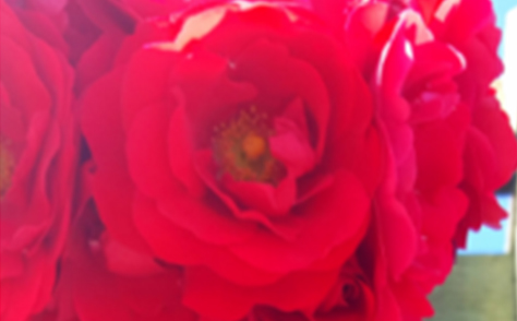 How InnerChange Could Help You Get a Rose